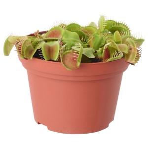 ГРЁНСКАН Растение в горшке, насекомоядное, различные растения