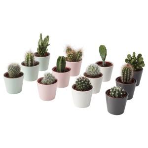 КАКТУС Комнтн раст в горшке, кактус, различные растения, 3шт