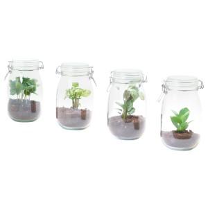 БЛАДВЕРК Флорариум, в банке, различные растения